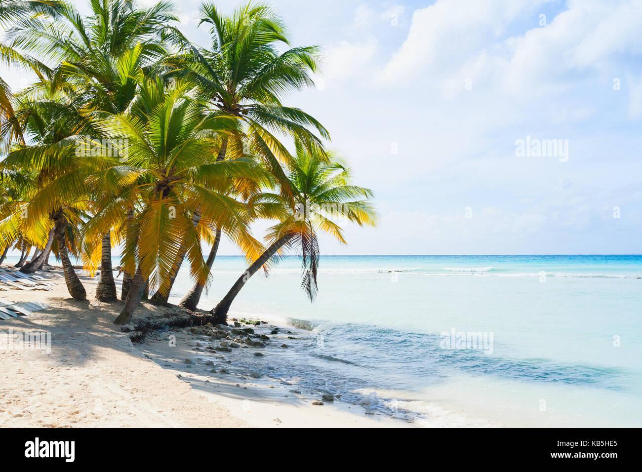 Coconut palm trees grow on white sandy beach. Caribbean Sea coast, Dominican republic, Saona island - Stock Image