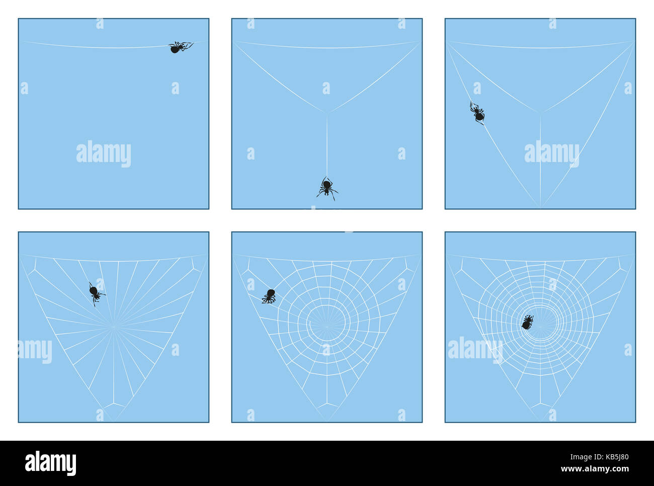 Spider web - construction manual in six stages from the first spinning thread to the complete orb web, depicted - Stock Image
