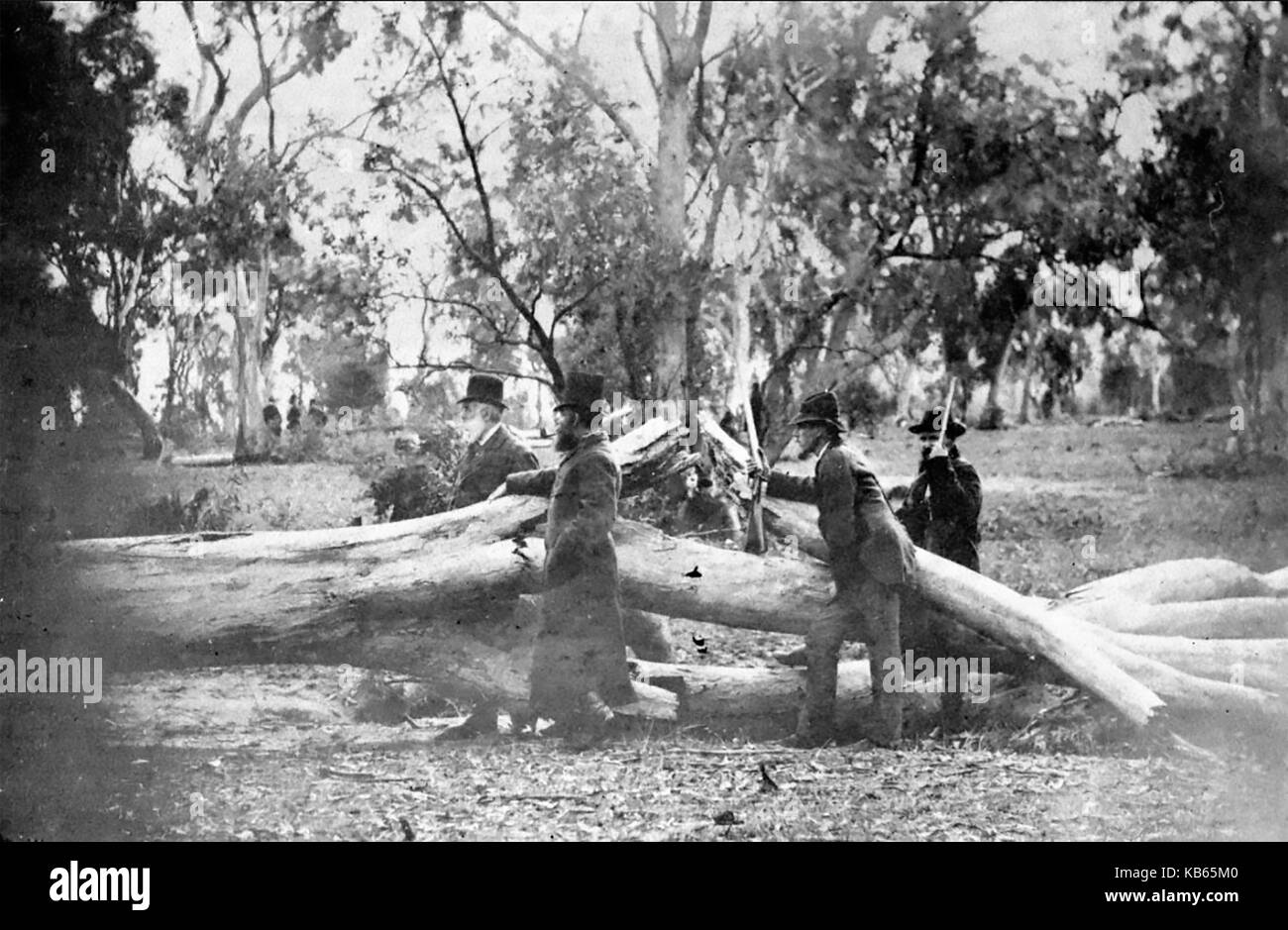 NED KELLY (1854-1880) Police and rangers pose beside the broken tree at Glenrowan, Victoria, where the Australian - Stock Image