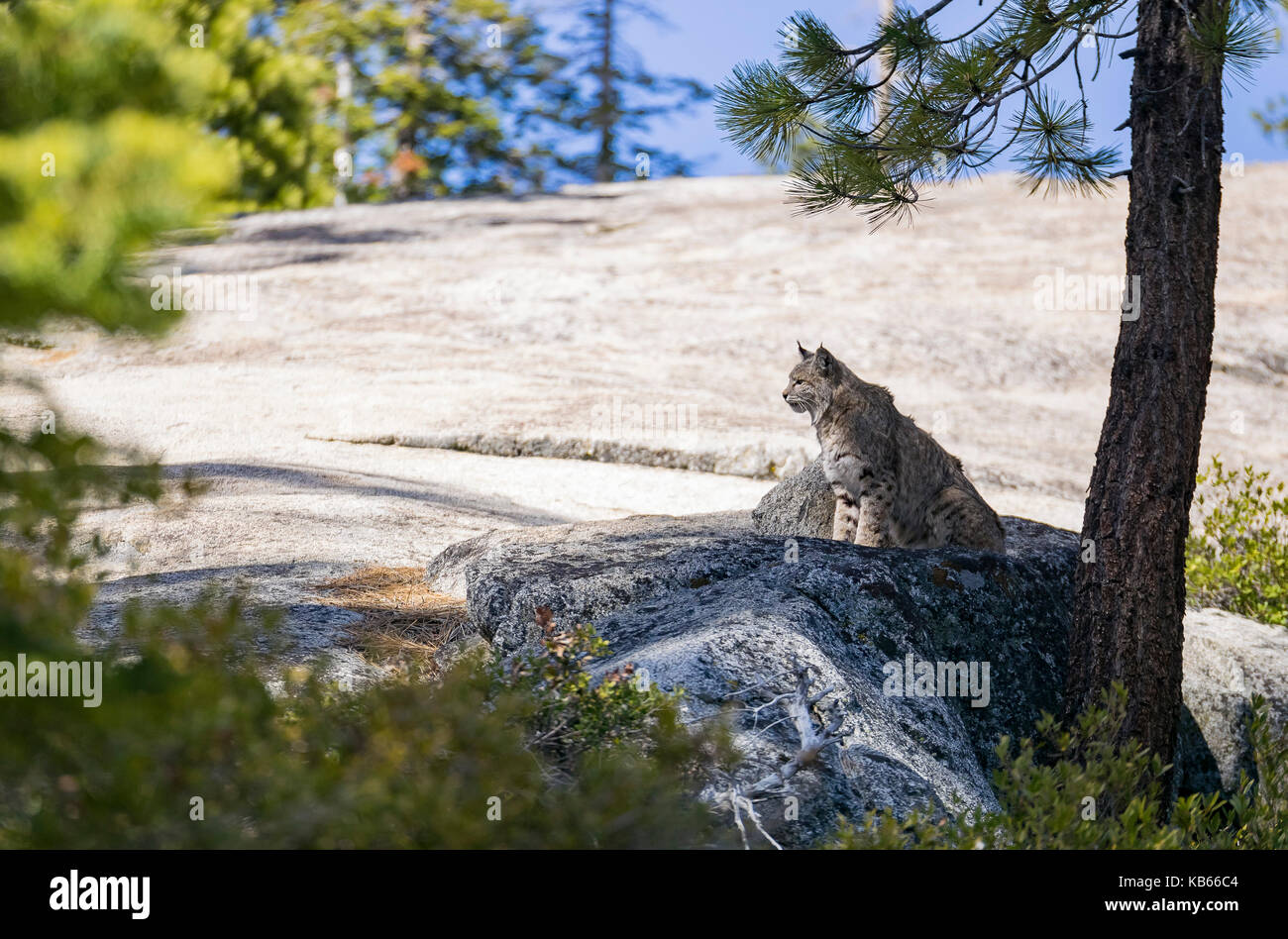 Undomesticated Cat sitting on a rock in a rural place - Stock Image
