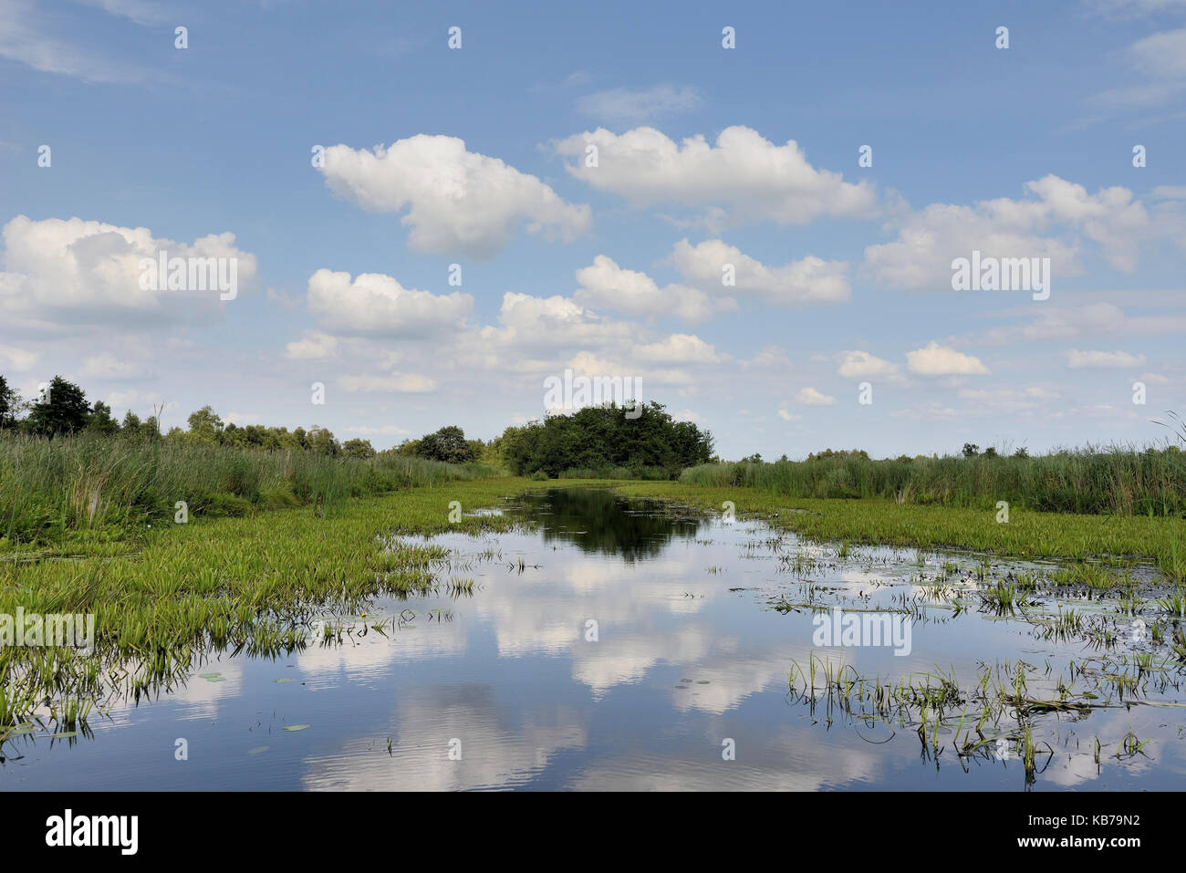 National Parc Weerribben-Wieden is a peat-bog area with reed, open water and Water Soldiers (Stratiotes aloides), - Stock Image
