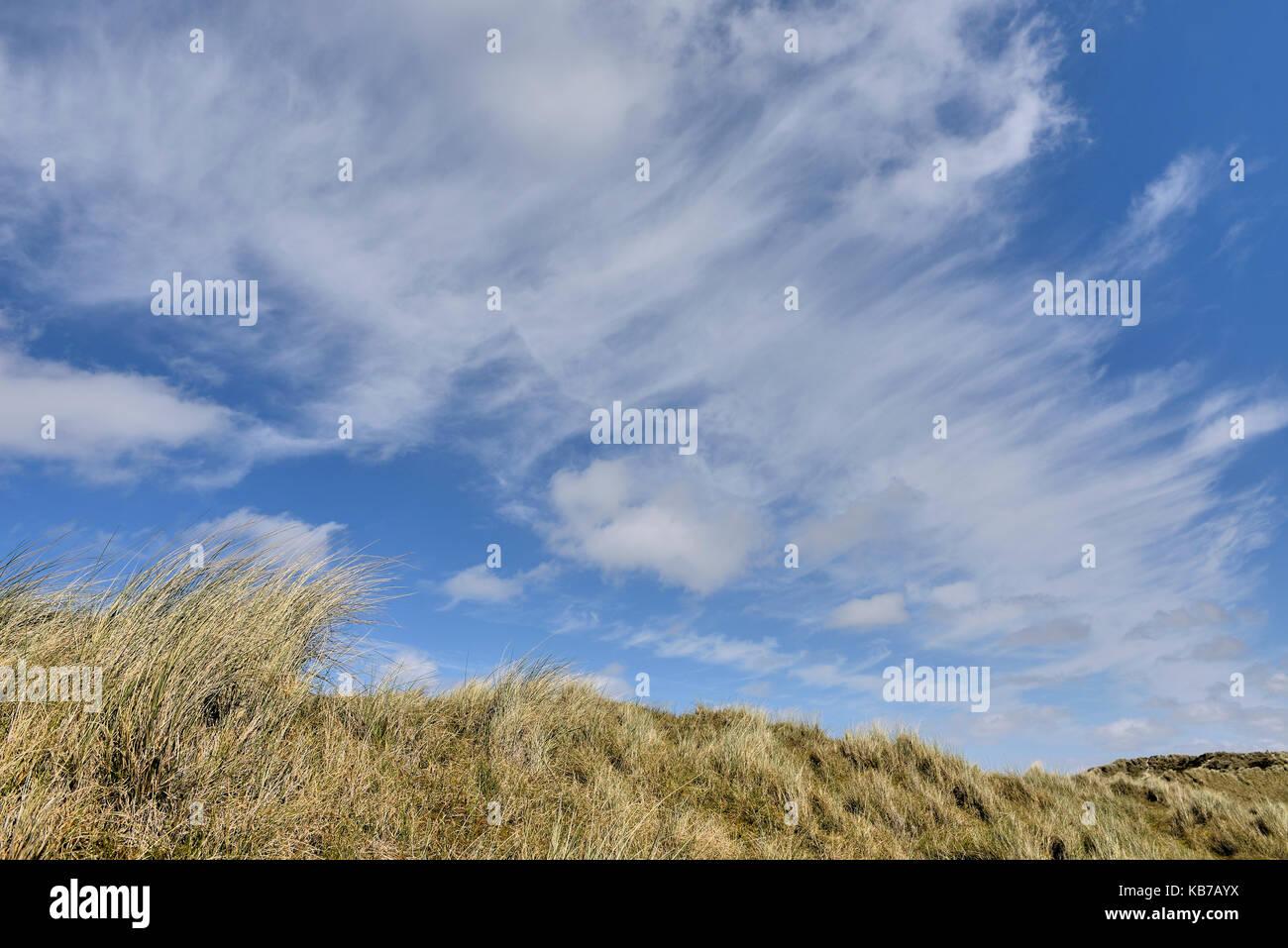 Cirrus fibratus clouds above the dunes of Terschelling, The Netherlands, Friesland, Terschelling - Stock Image