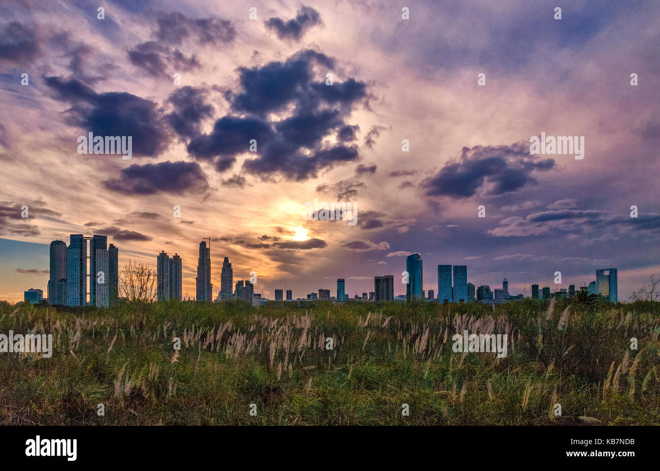 View of the city from the Ecological reservation. Puerto Madero, Buenos Aires, Argentina. - Stock Image