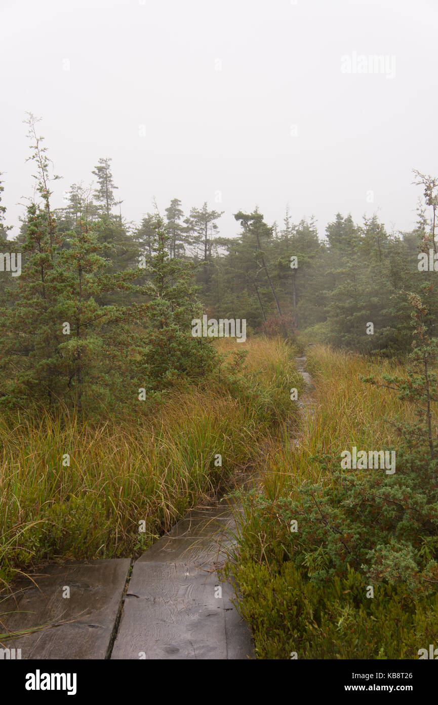 The Ponkapoag Marsh on a foggy day. - Stock Image