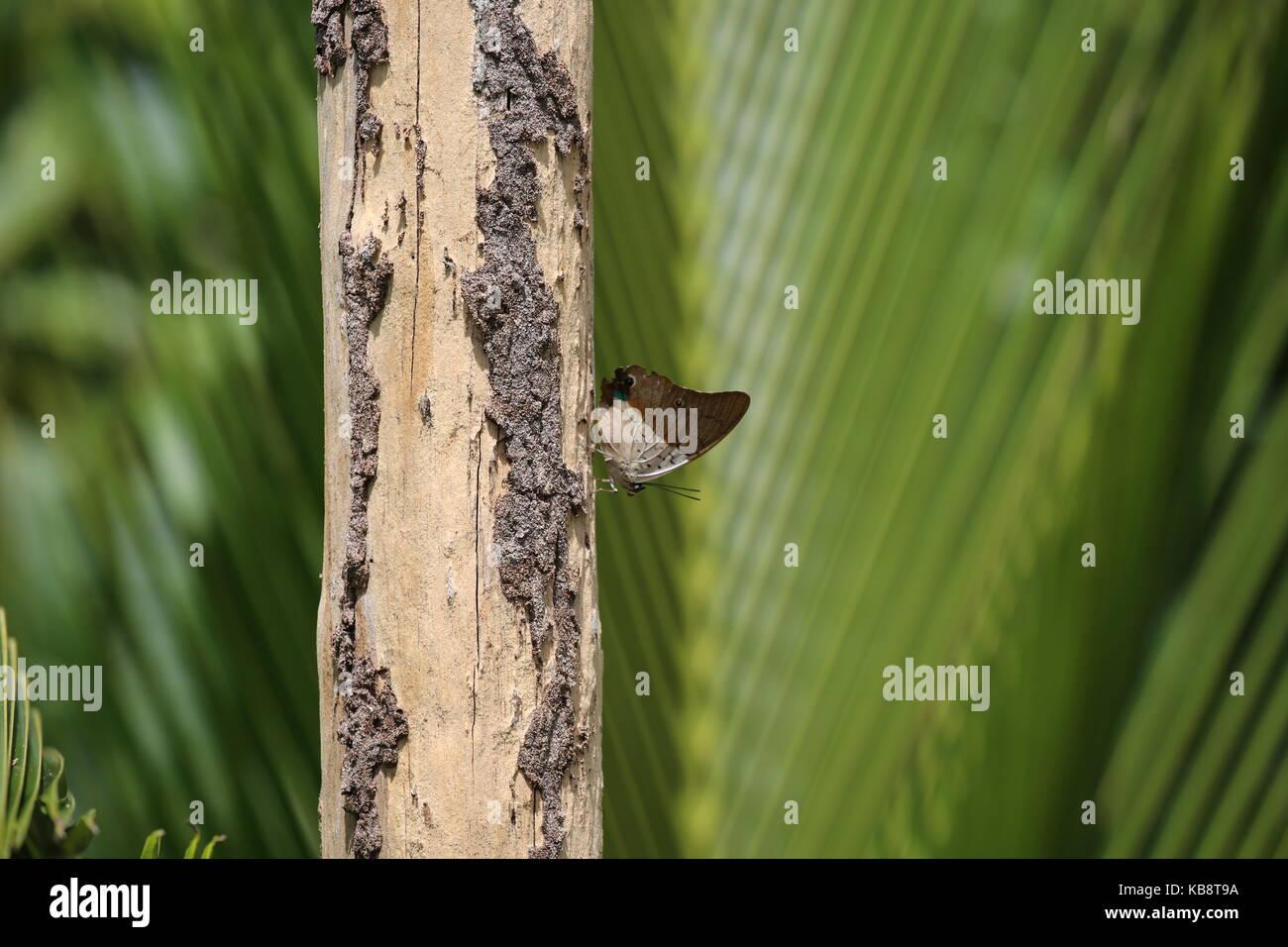 Schmetterling auf Baumstamm mit grünem Hintergrund - Butterfly on tree trunk with green background - Stock Image