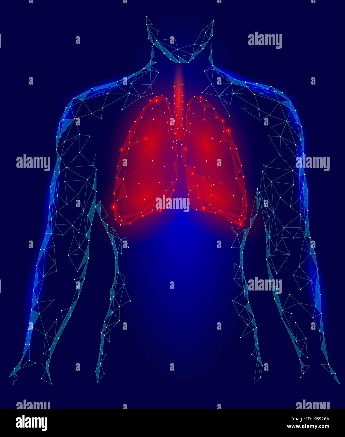 Human Lungs Pulmonary infection Internal Organ. Respiratory system Inside Body Silhouette. Low Poly 3d Connected - Stock Image