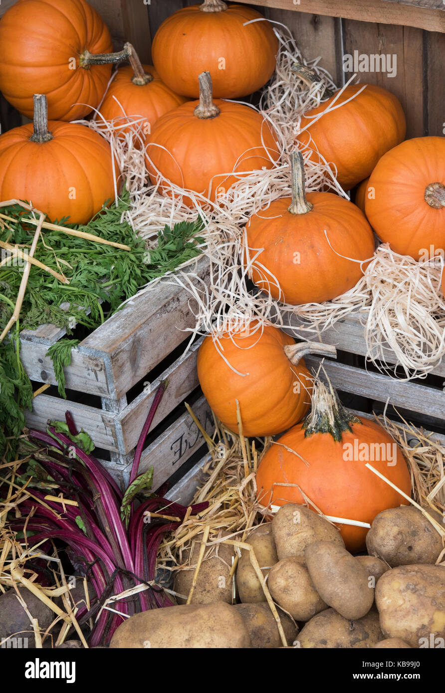 Pumpkin and potato display at Daylesford Organic farm shop autumn festival. Daylesford, Cotswolds, Gloucestershire, Stock Photo