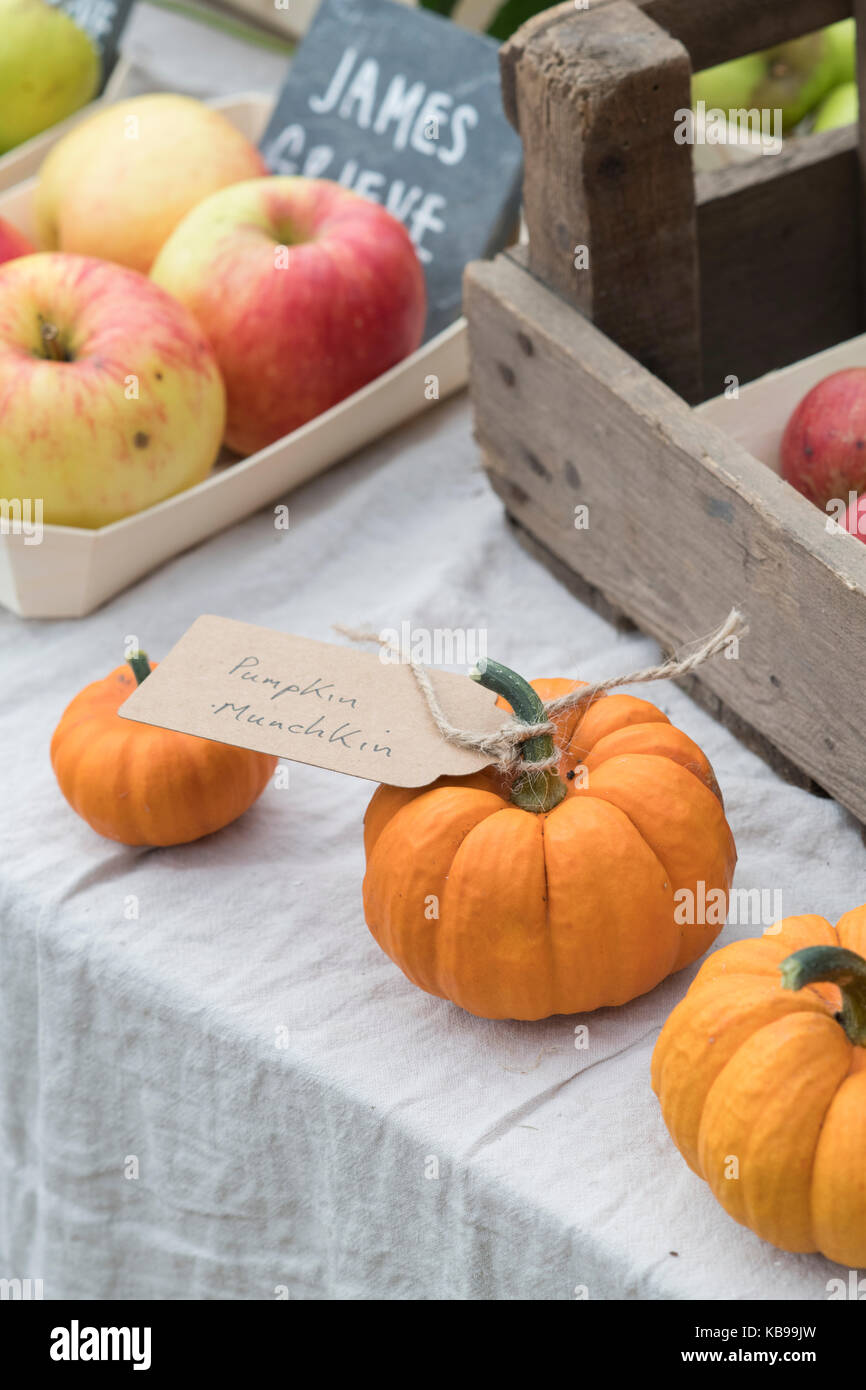 Pumpkin munchkin and apples display at Daylesford Organic farm shop autumn festival. Daylesford, Cotswolds, Gloucestershire, - Stock Image