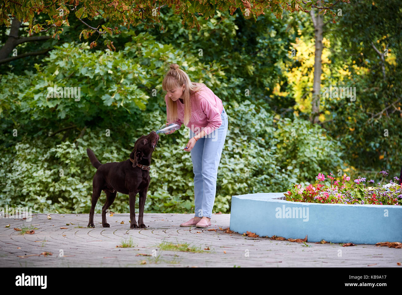 the dog drinks water on a hot day with the bottles - Stock Image