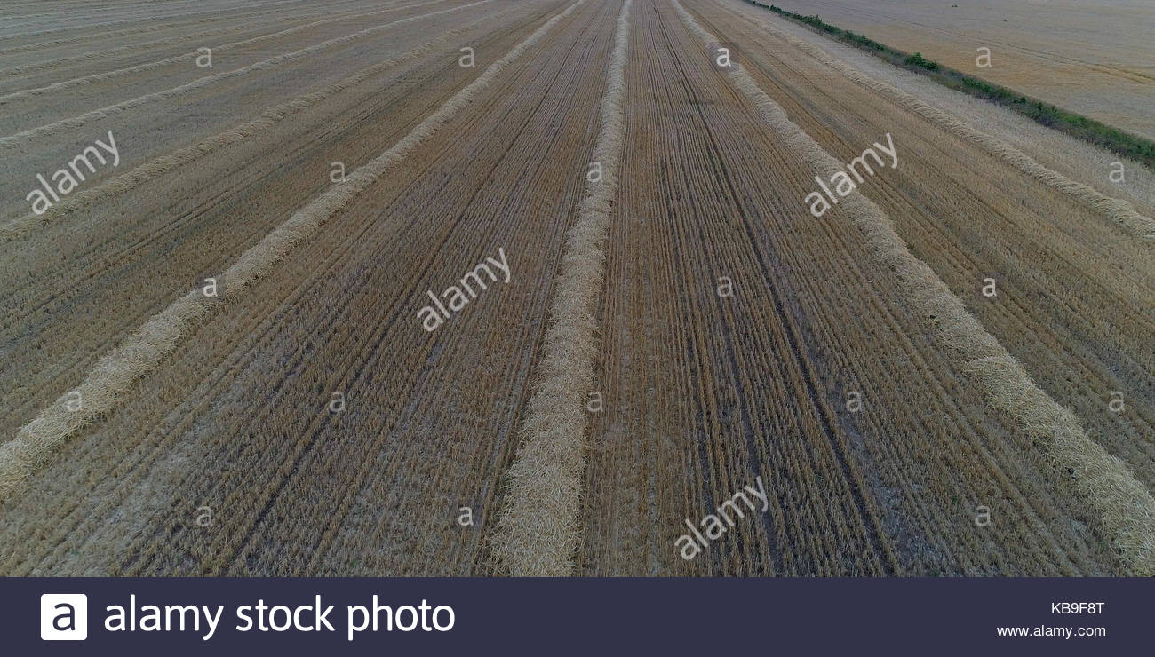 harvested wheat field - Stock Image