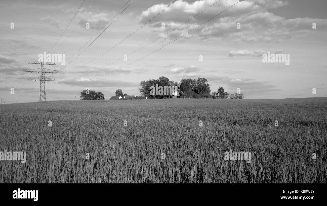 Wheat field in Sachsen-Anhalt, Germany. - Stock Image