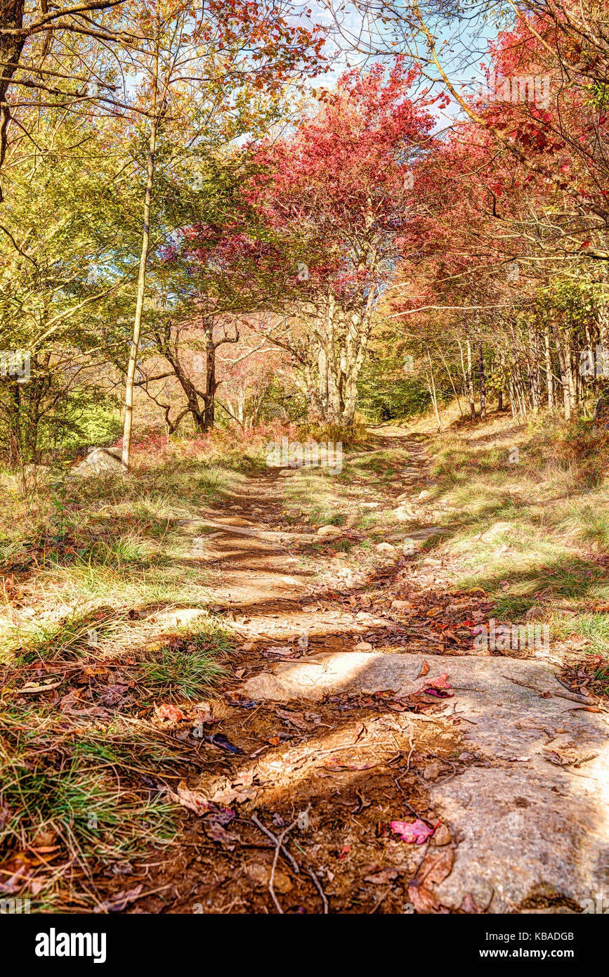 Trail path in autumn forest on hill going up in Dolly Sods, West Virginia - Stock Image