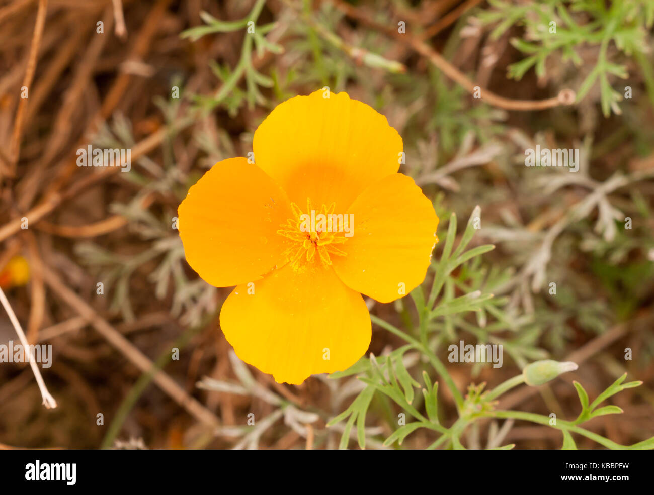 Gorgeous orange golden four petal flower close up essex england gorgeous orange golden four petal flower close up essex england uk mightylinksfo
