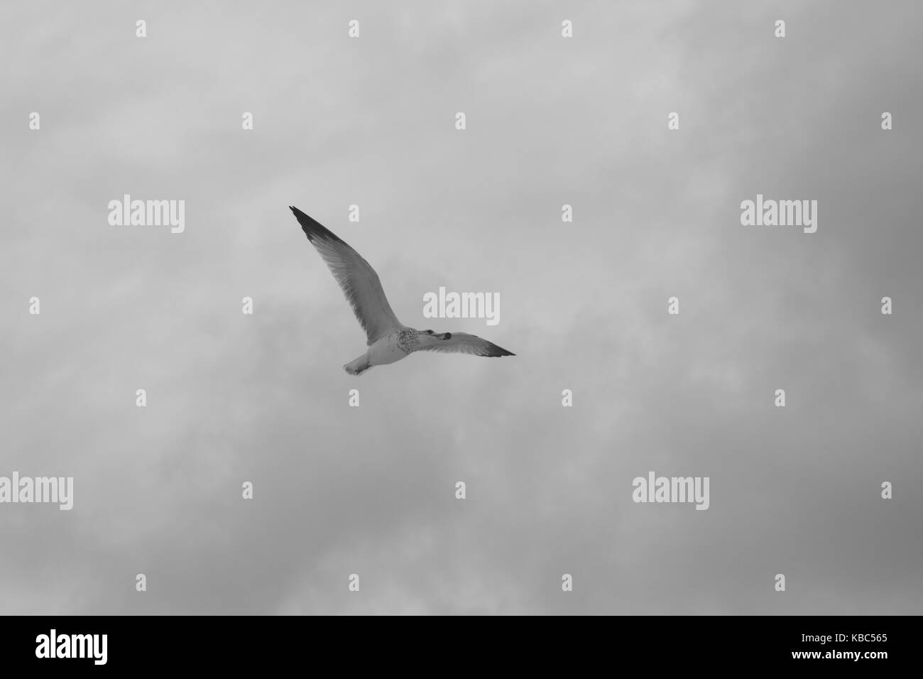 Soaring through the cloudy skies - Stock Image