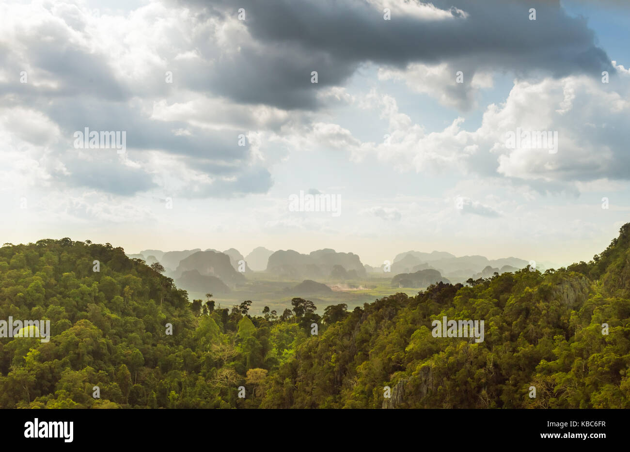 rain forest in Thailand - Stock Image