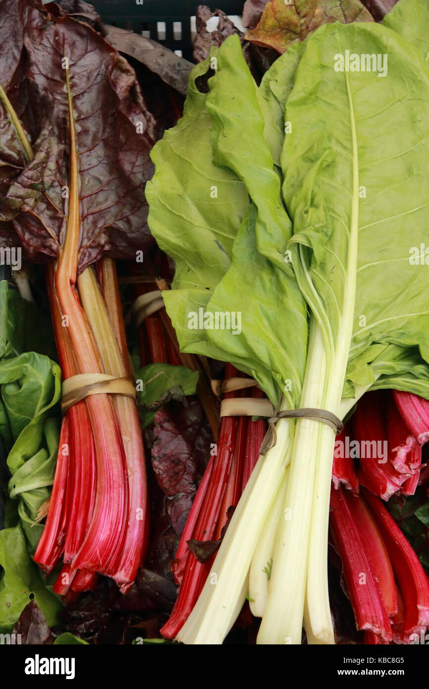 Different leaves of ecologically grown chard Stock Photo