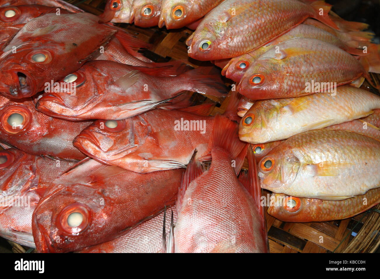 Red snapper and yellow fish on Market - Stock Image