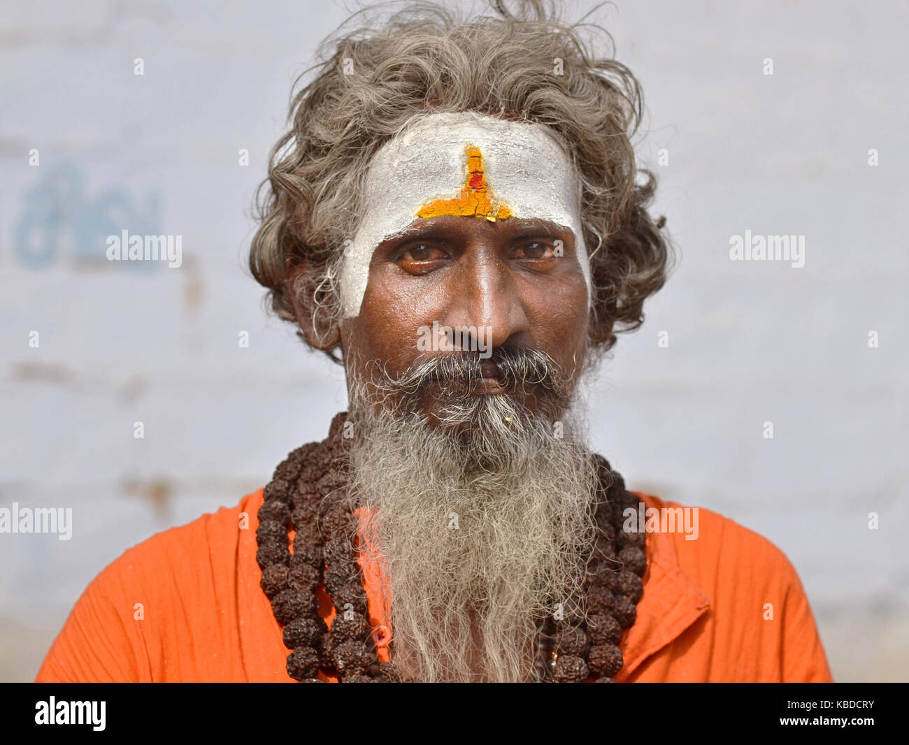 Middle-aged Shaivite sadhu (Hindu holy man who worships Shiva) with white vibhuti, wearing strings of big rudraksha - Stock Image