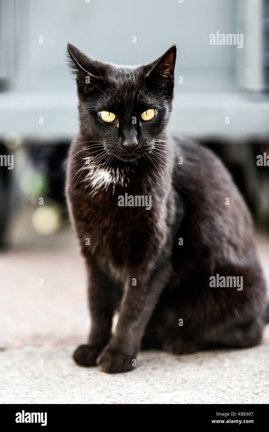 Young black cat sitting outdoor, sweet and beautiful. - Stock Image