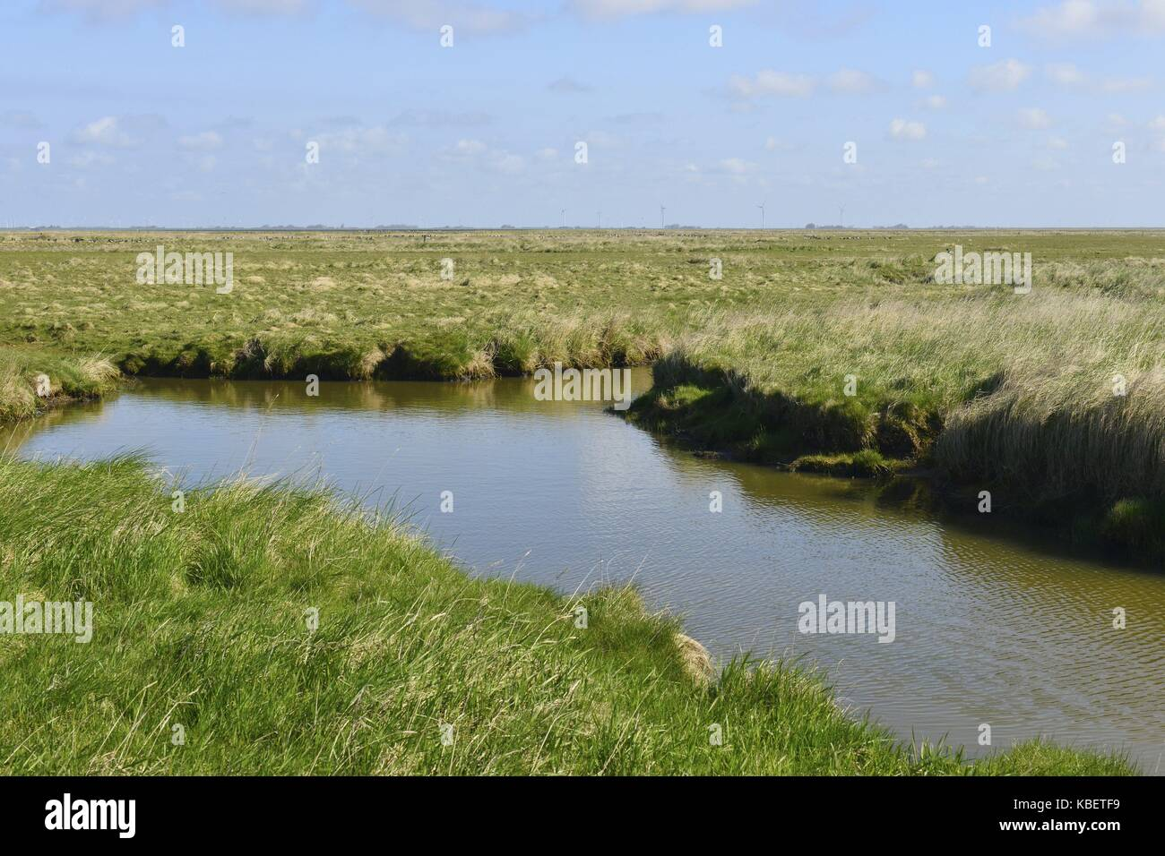 A waterhole in the pastureland vegetated with green grass on the small island Hallig Oland, 21 April 2016 | usage - Stock Image