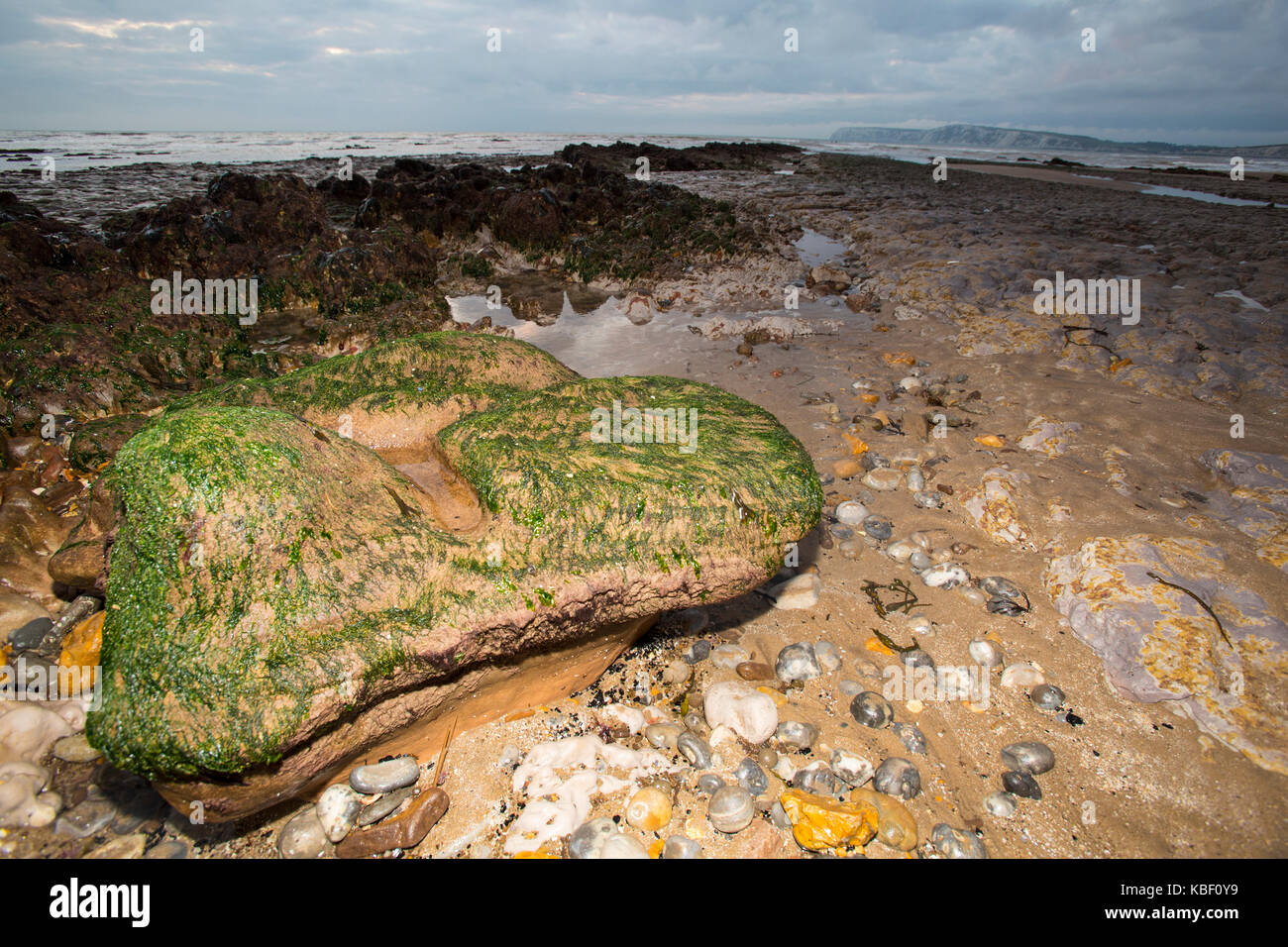 Iguanodon fossil footprint cast on the beach at Compton Bay, Isle of Wight, England, UK, - Stock Image