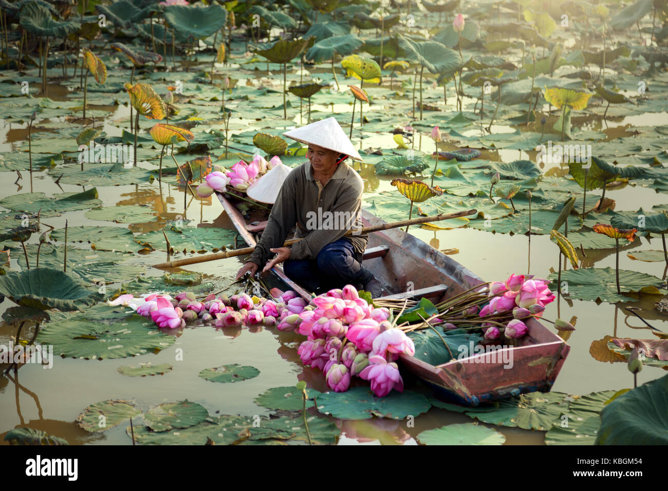 Thailand women harvest lotus flower on the lake - Stock Image