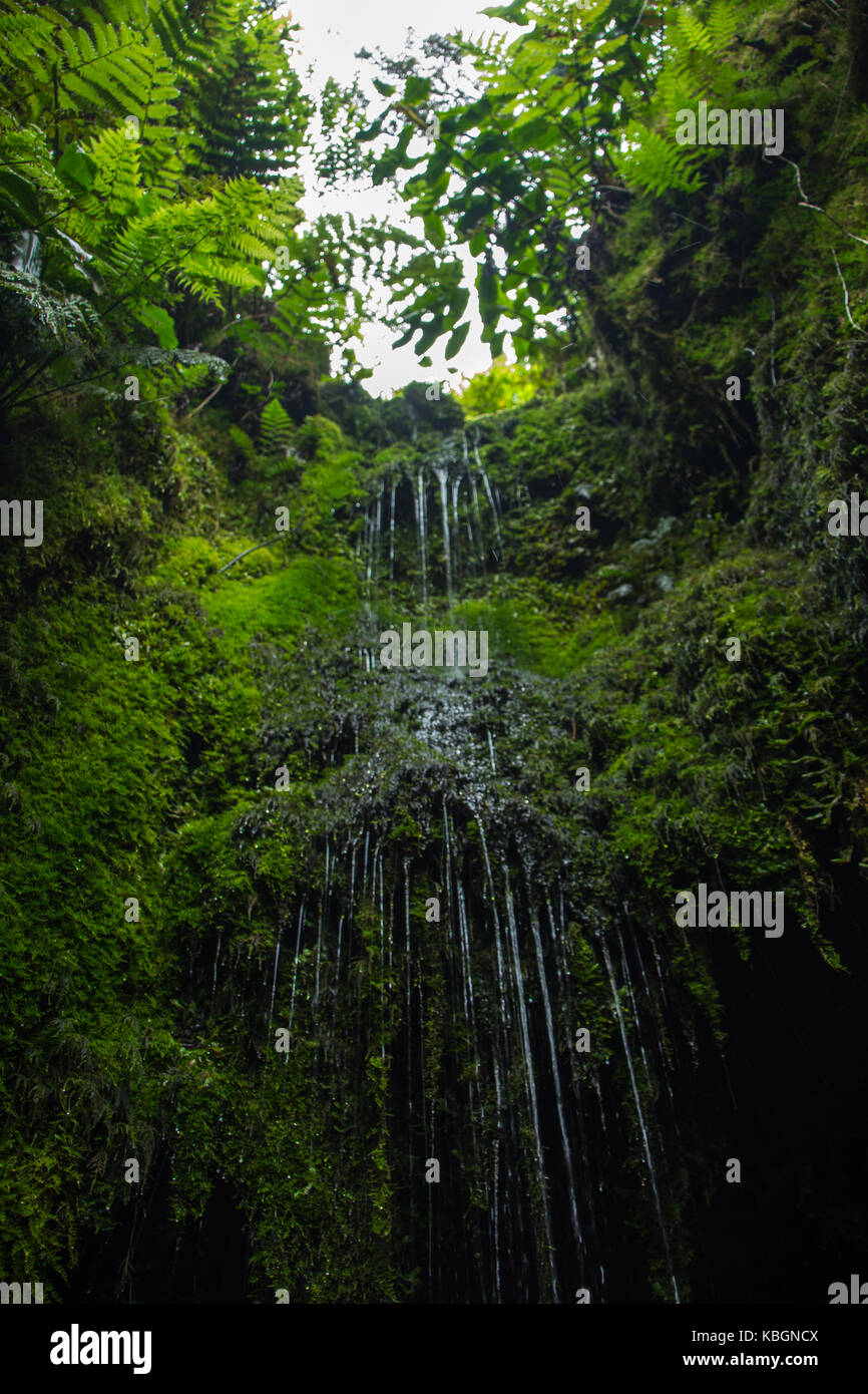 nature fountain with a lot of green and water, the water is drinkable and it is very tasty. there is a cave under - Stock Image