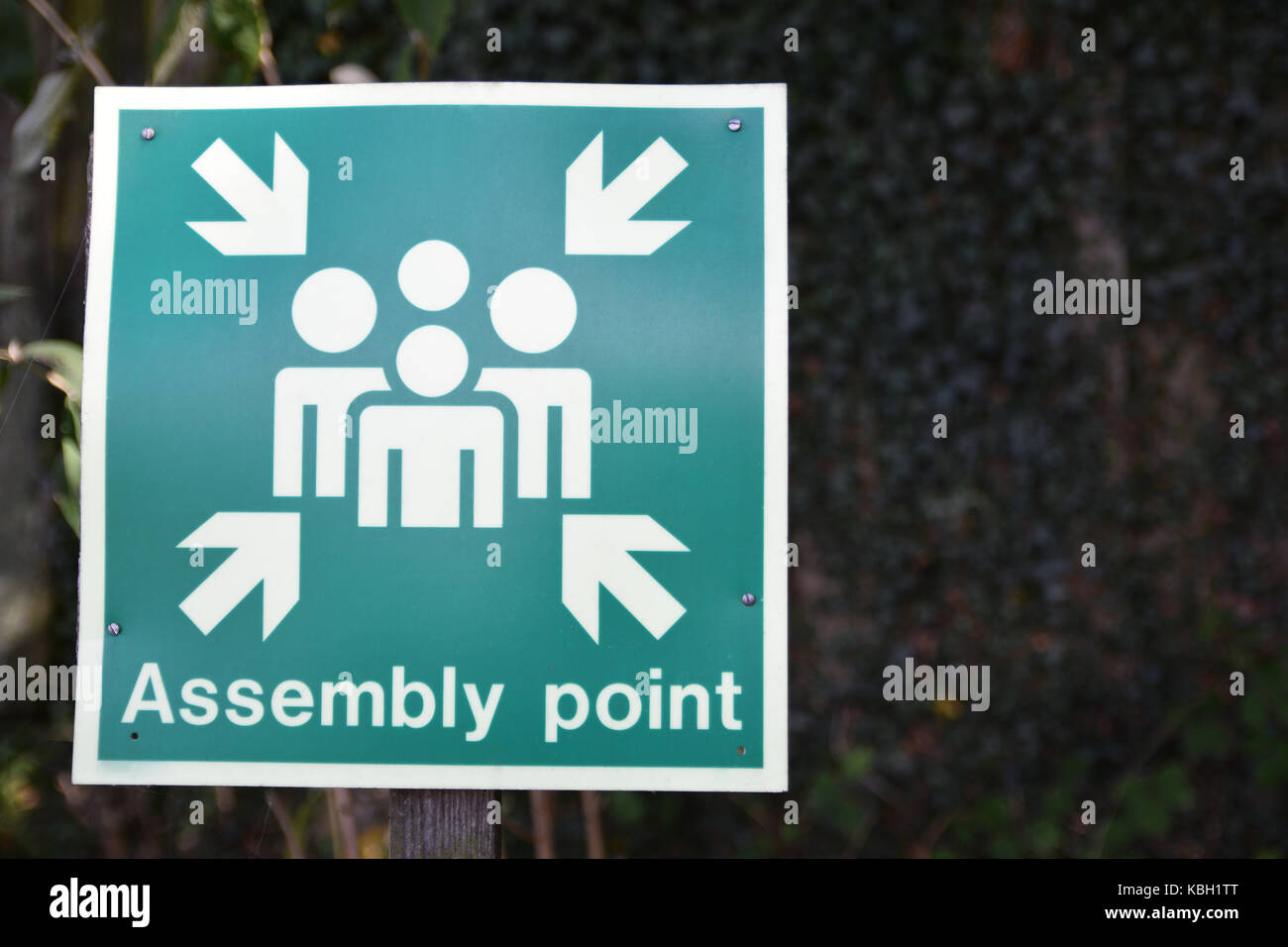 old green emergency assembly point sign on a post with foliage in the background - Stock Image