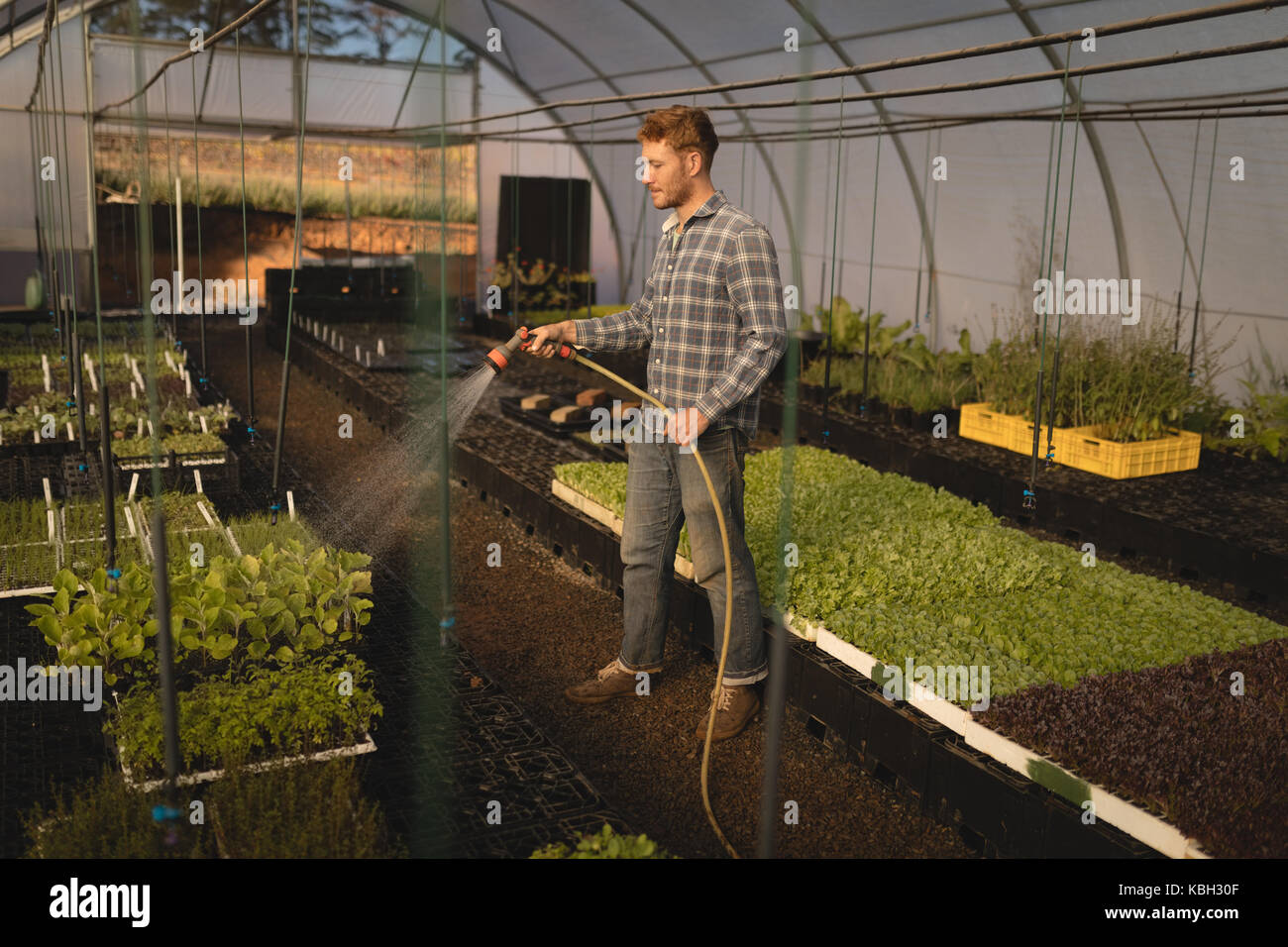 Young farmer watering plants in greenhouse Stock Photo