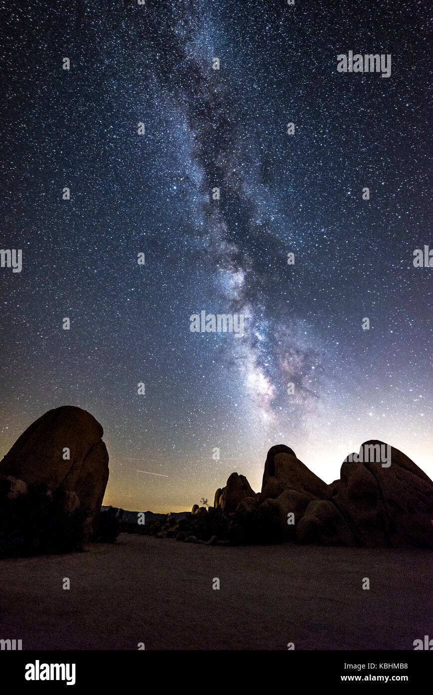 The night sky peppered with thousands of stars and the beautiful Milky Way, which hangs vertically over a Joshua - Stock Image