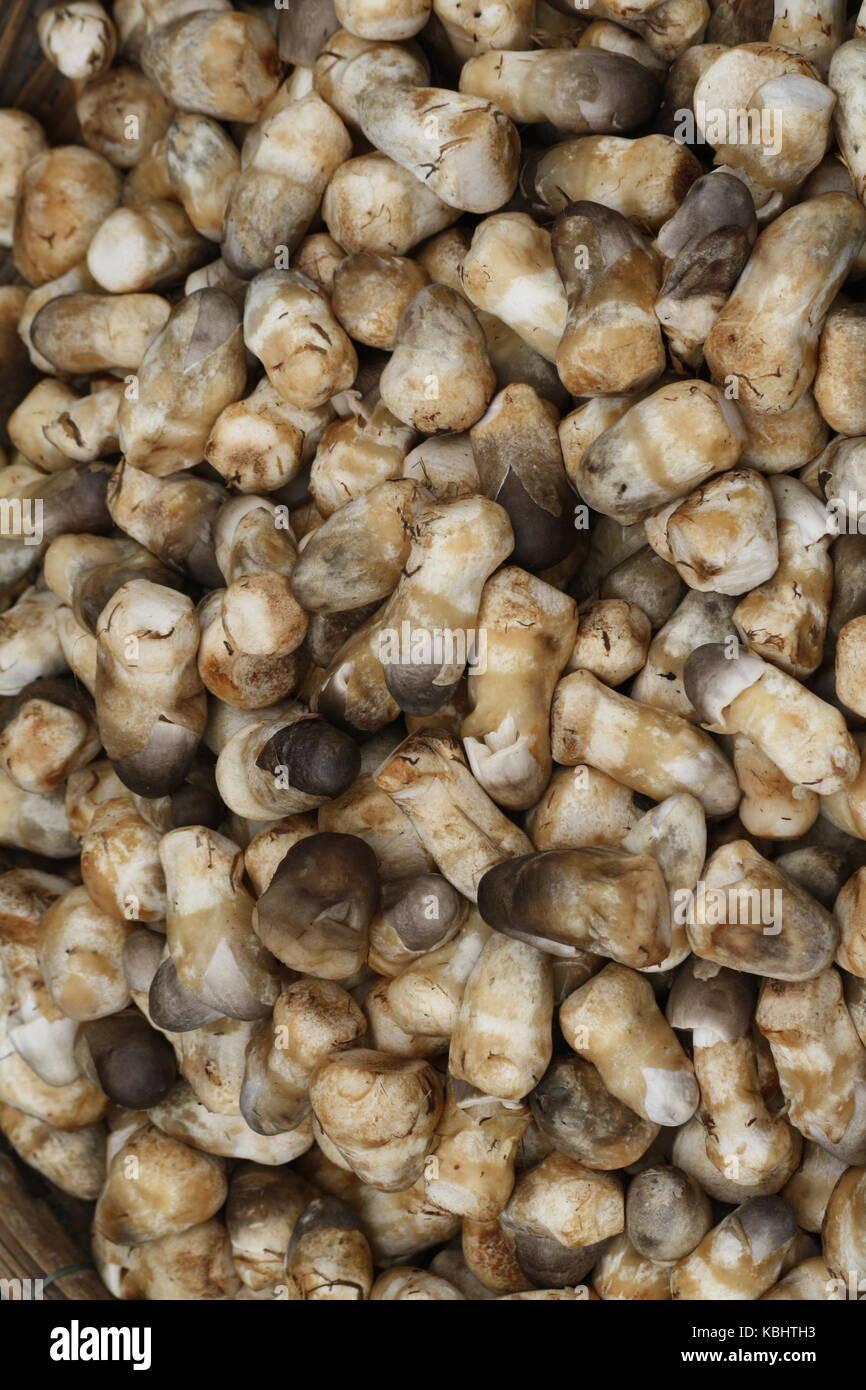 Asiatische Pilze - Strohpilz Hed Fang - Stock Image