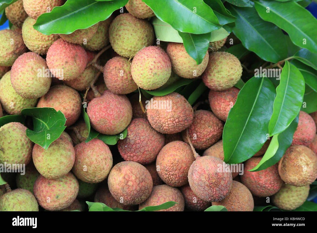 litchi Frucht - lychee - fruits - mit  schale - Stock Image