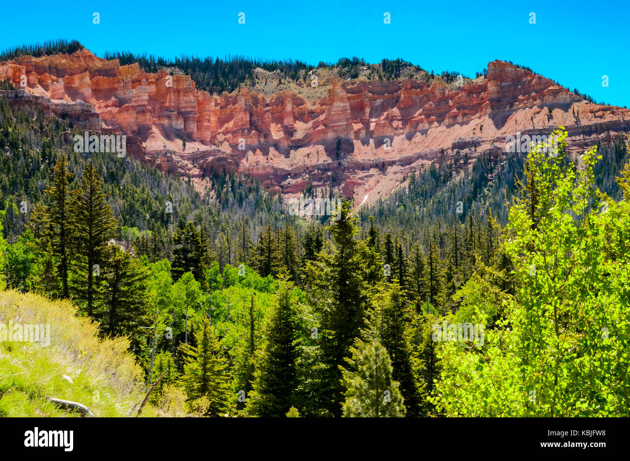 Cedar Breaks National Monument Utah, USA - Stock Image