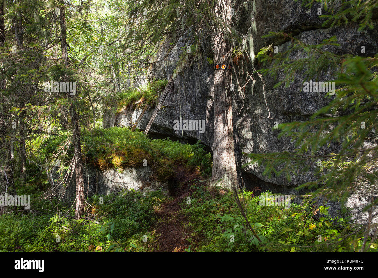 Huge boulders in a primeval forest, late seral forest. Path and signs. - Stock Image