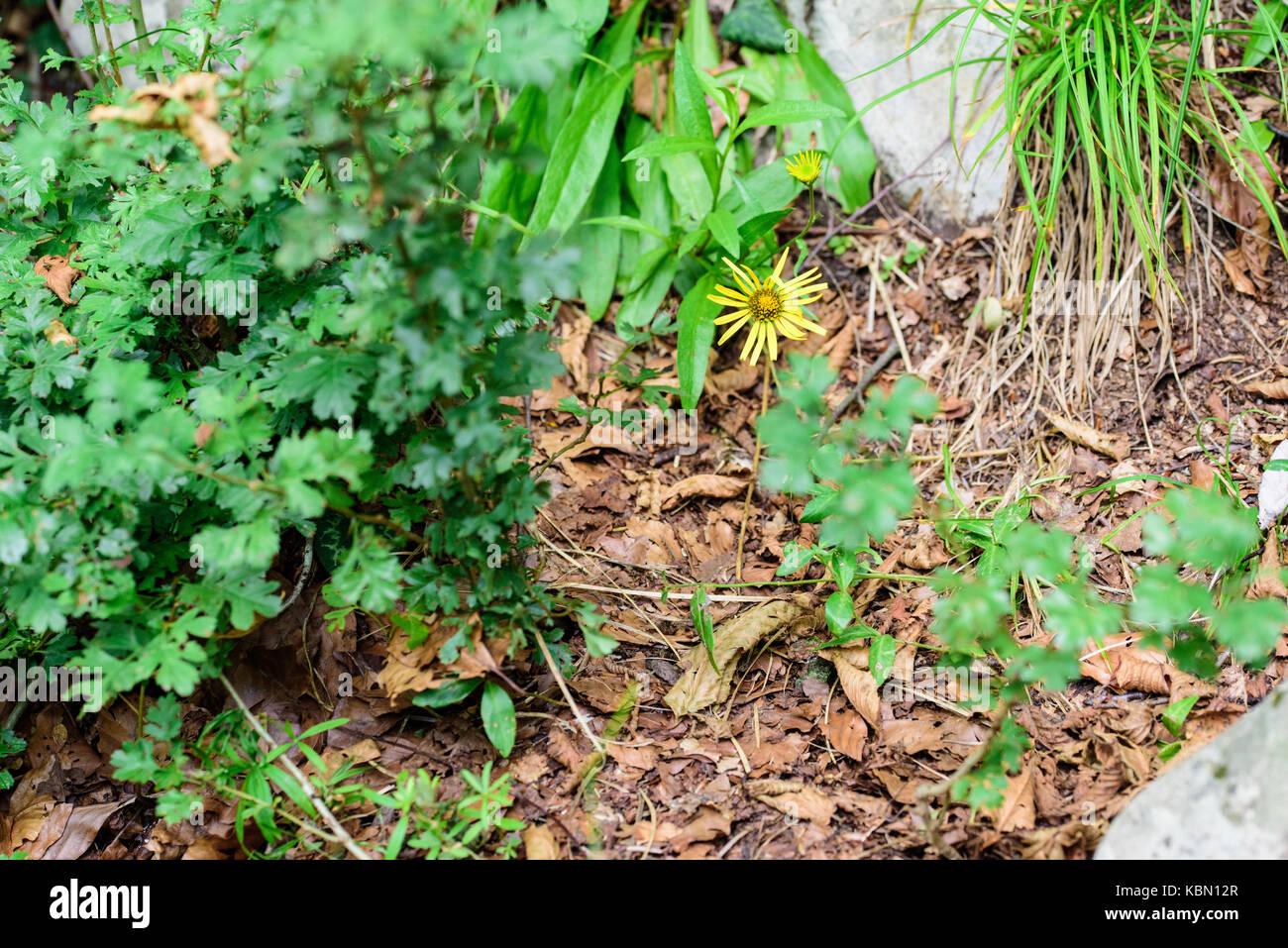 Undergrowth flowers Stock Photo
