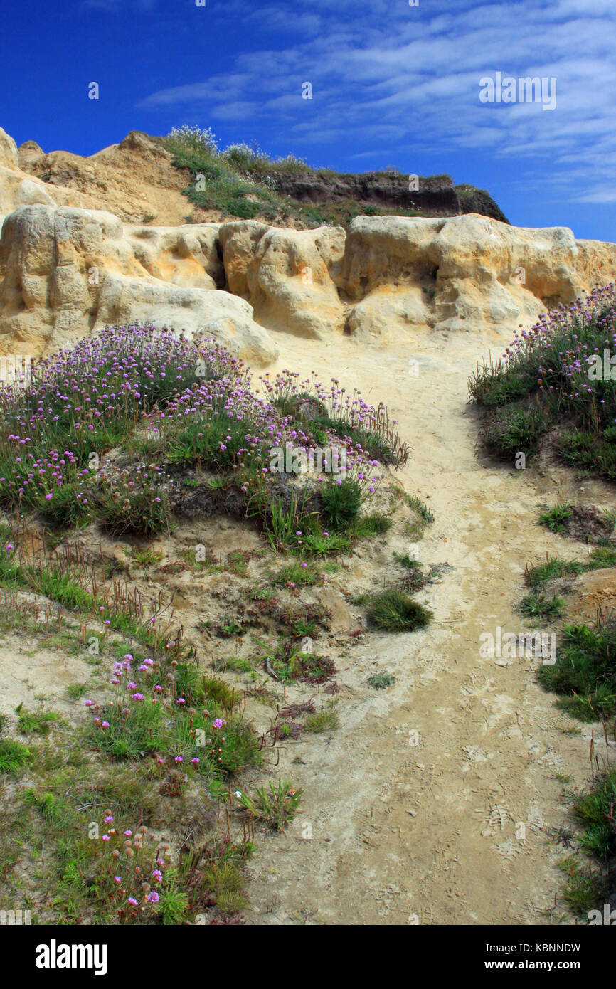 A beachside pathway leads up a sandy cliff. Stock Photo