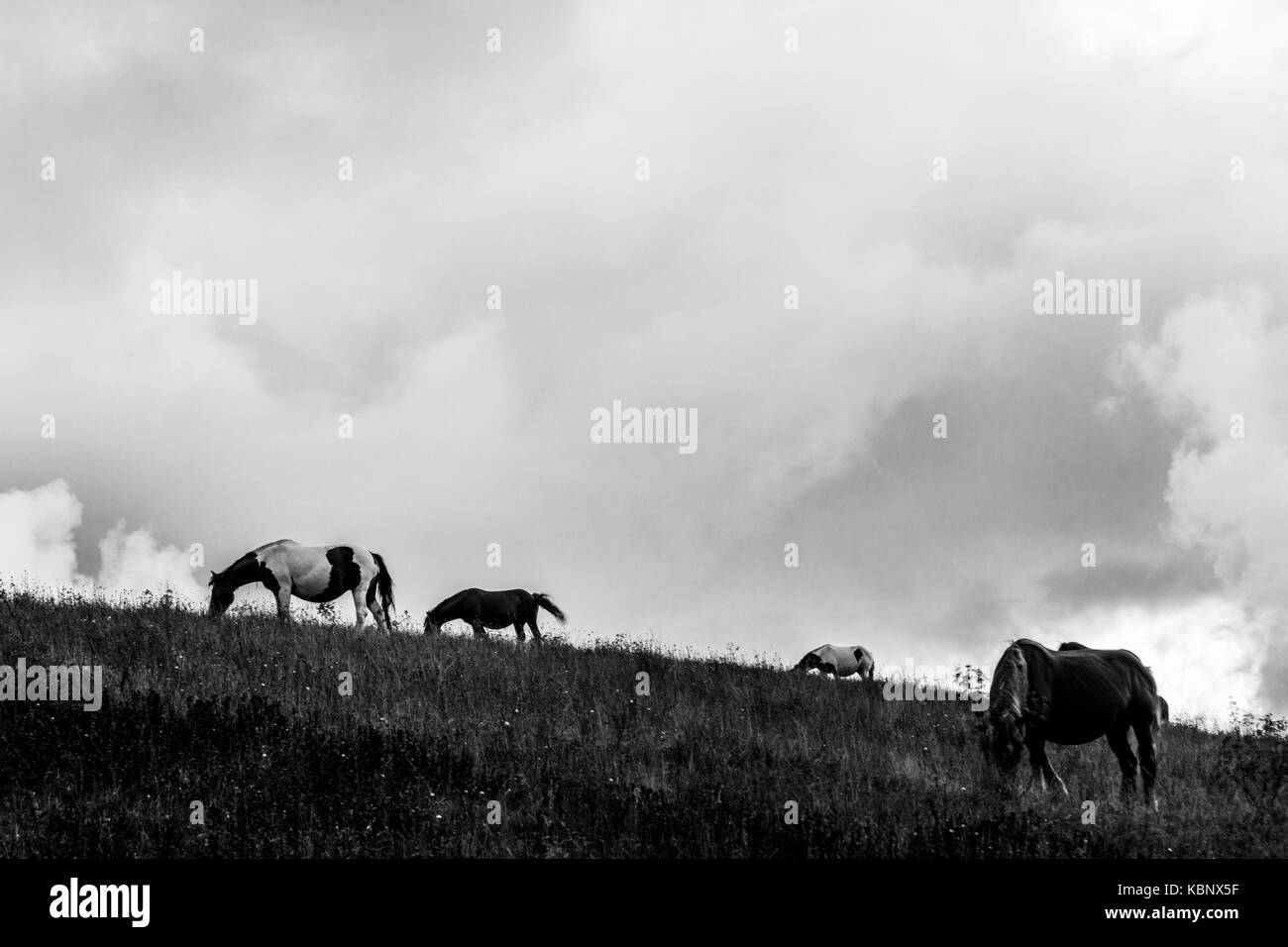 Horses pasturing on top of a hill, beneath an overcast, moody sky - Stock Image