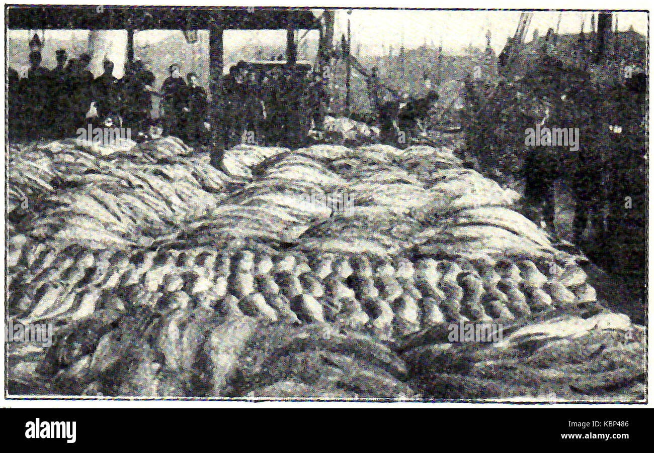 1914 - A vintage photograph of  Grimsby fish market - Stock Image