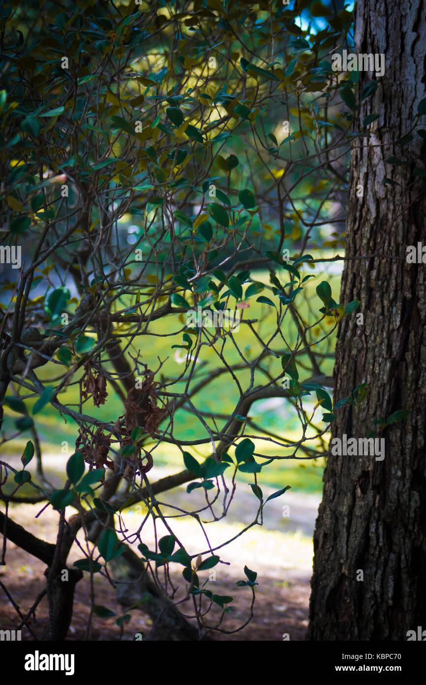 Woods - Stock Image