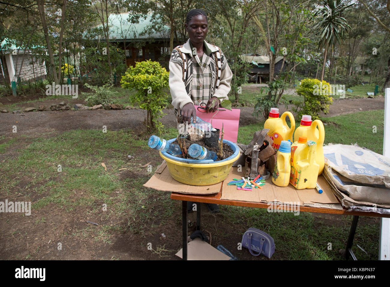 Using plastic water bottles to irrigate young seedings Elsamere Kenya - Stock Image