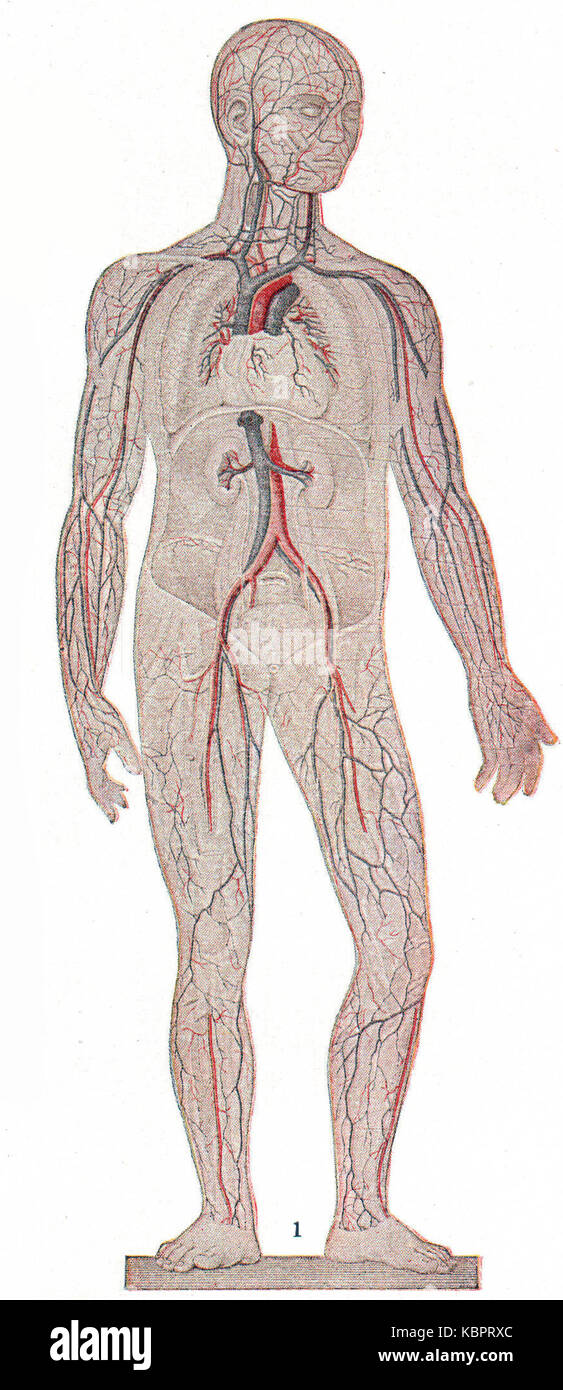 General Circulation In The Human Body Extract Stock Photo 162156244