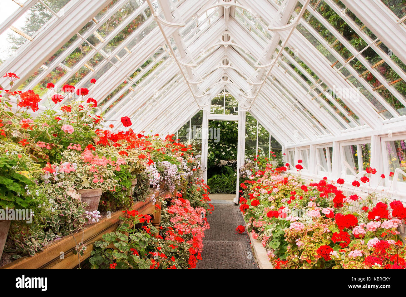 A greenhouse, greenhouse or hothouse is a light-permeable construction which allows protected and controlled cultivating - Stock Image