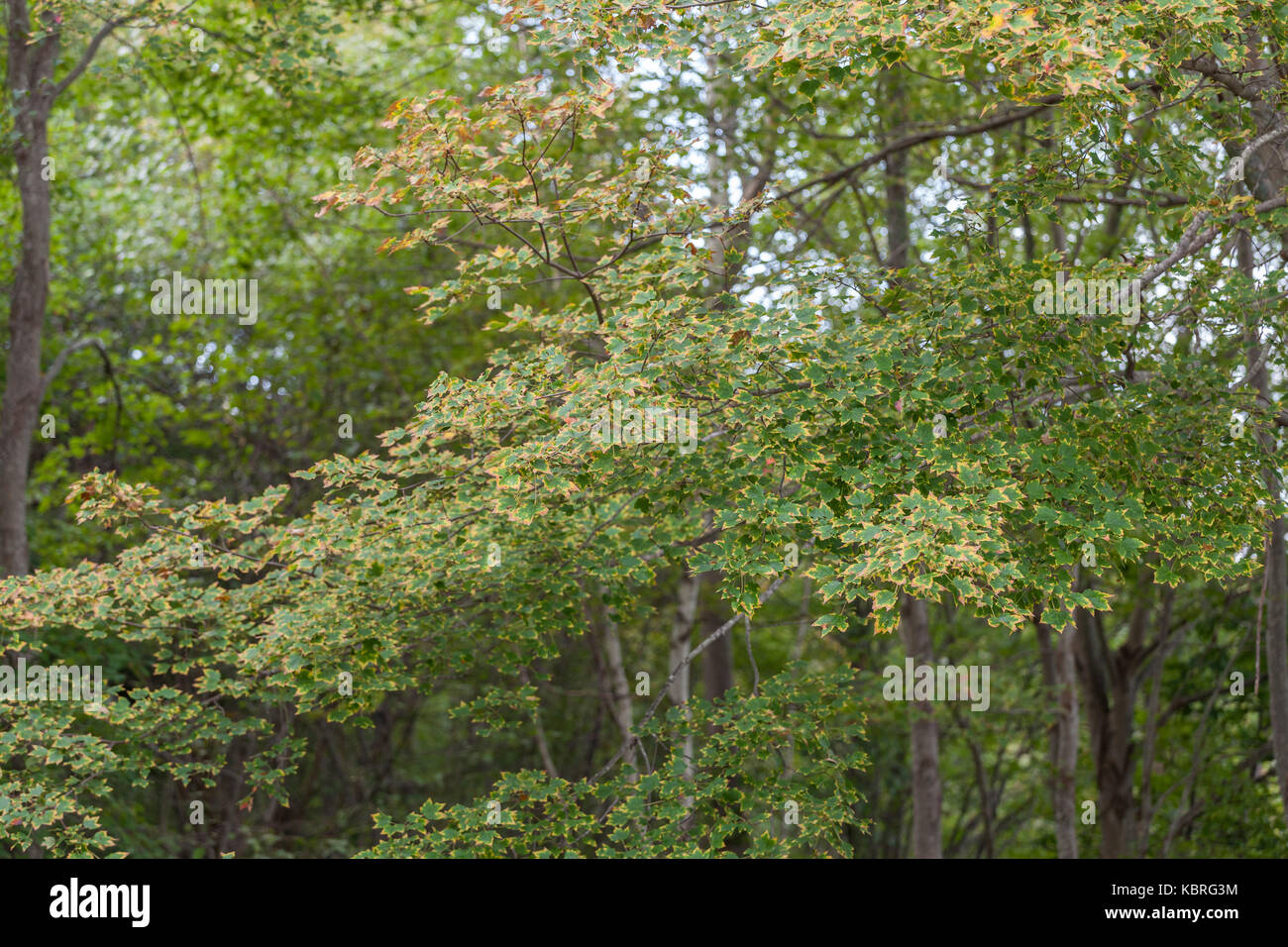 Trees Turning Color Stock Photos & Trees Turning Color Stock Images ...
