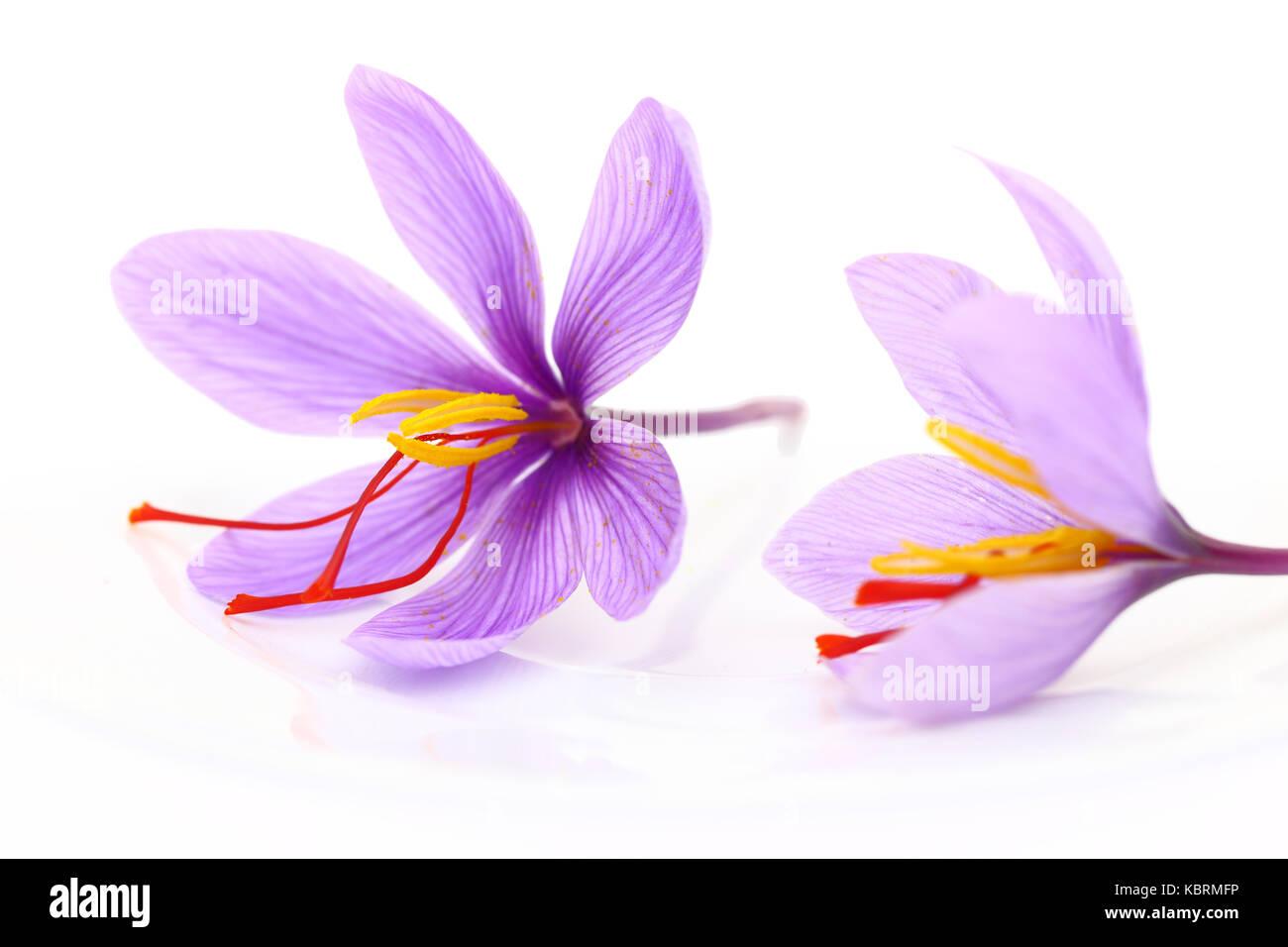 Close up of saffron flowers - Stock Image