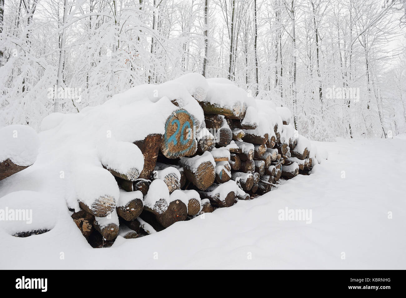 Pile of wood in winter, North Rhine-Westphalia, Germany | Holzstapel im Winter, Nordrhein-Westfalen, Deutschland Stock Photo