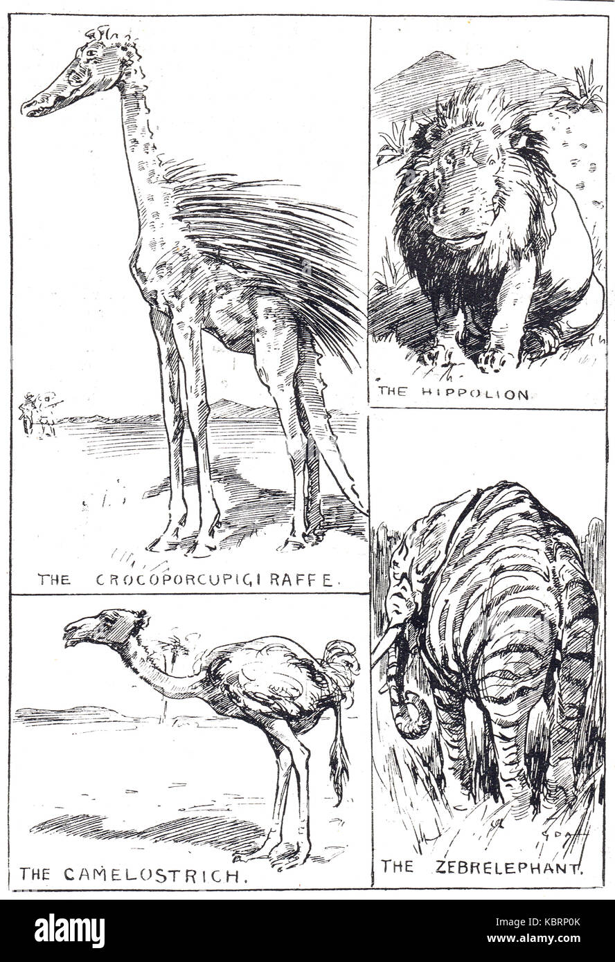 Fantasy creatures, Hippolion, Camelostrich, Zebrelephant, & Crocoporcupigiraffe. Punch cartoon of 1909 - Stock Image
