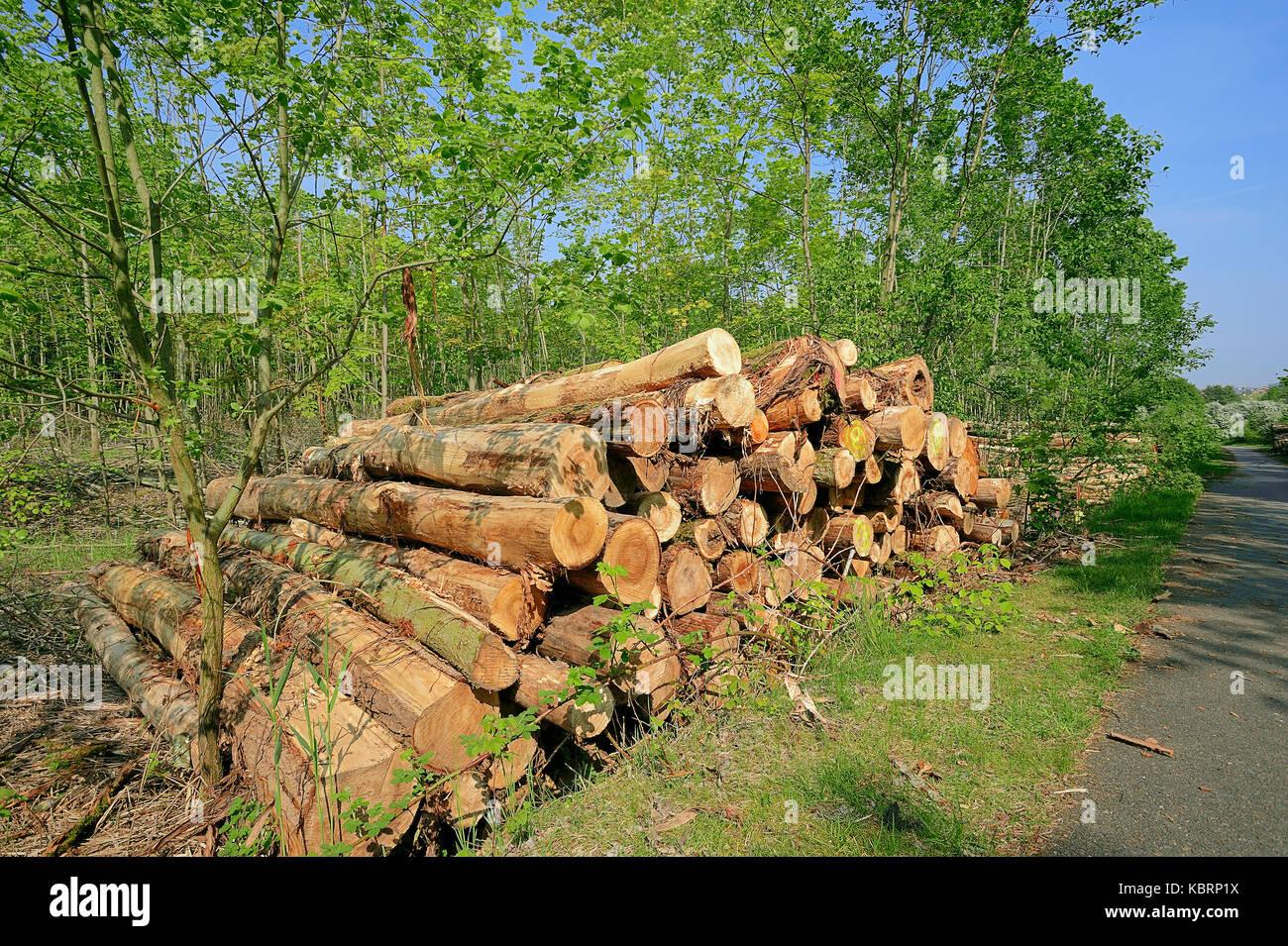 Pile of wood, North Rhine-Westphalia, Germany | Holzstapel an Waldrand, Nordrhein-Westfalen, Deutschland - Stock Image