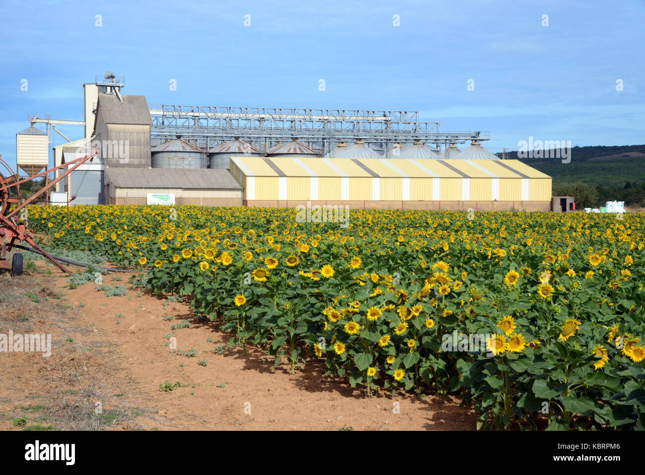 Sunflower Field & Agricultural Building or Silo near Rians in the Var Département Provence France - Stock Image