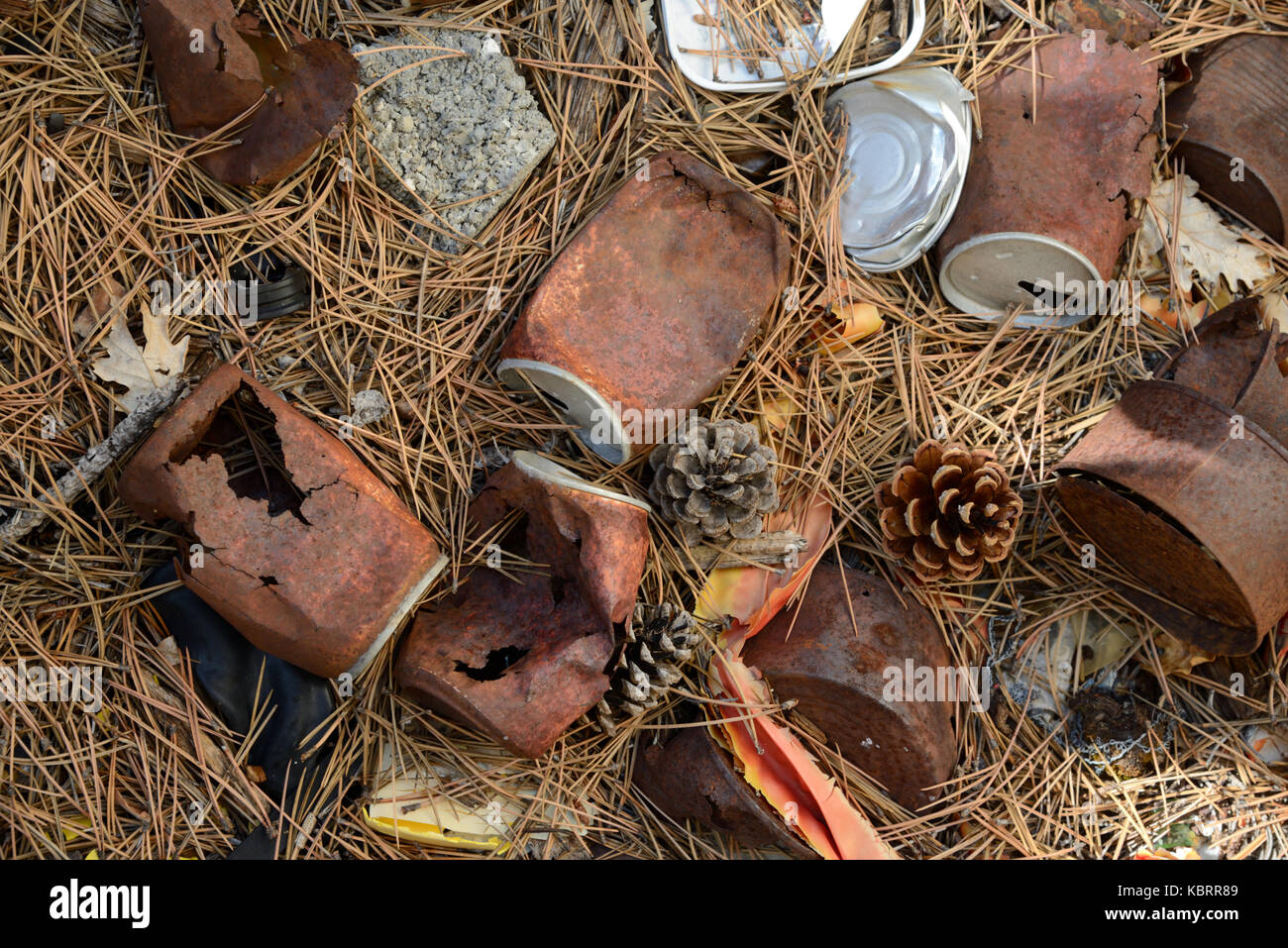 Rusty Old Tin Cans Scattered on Forest Floor - Stock Image