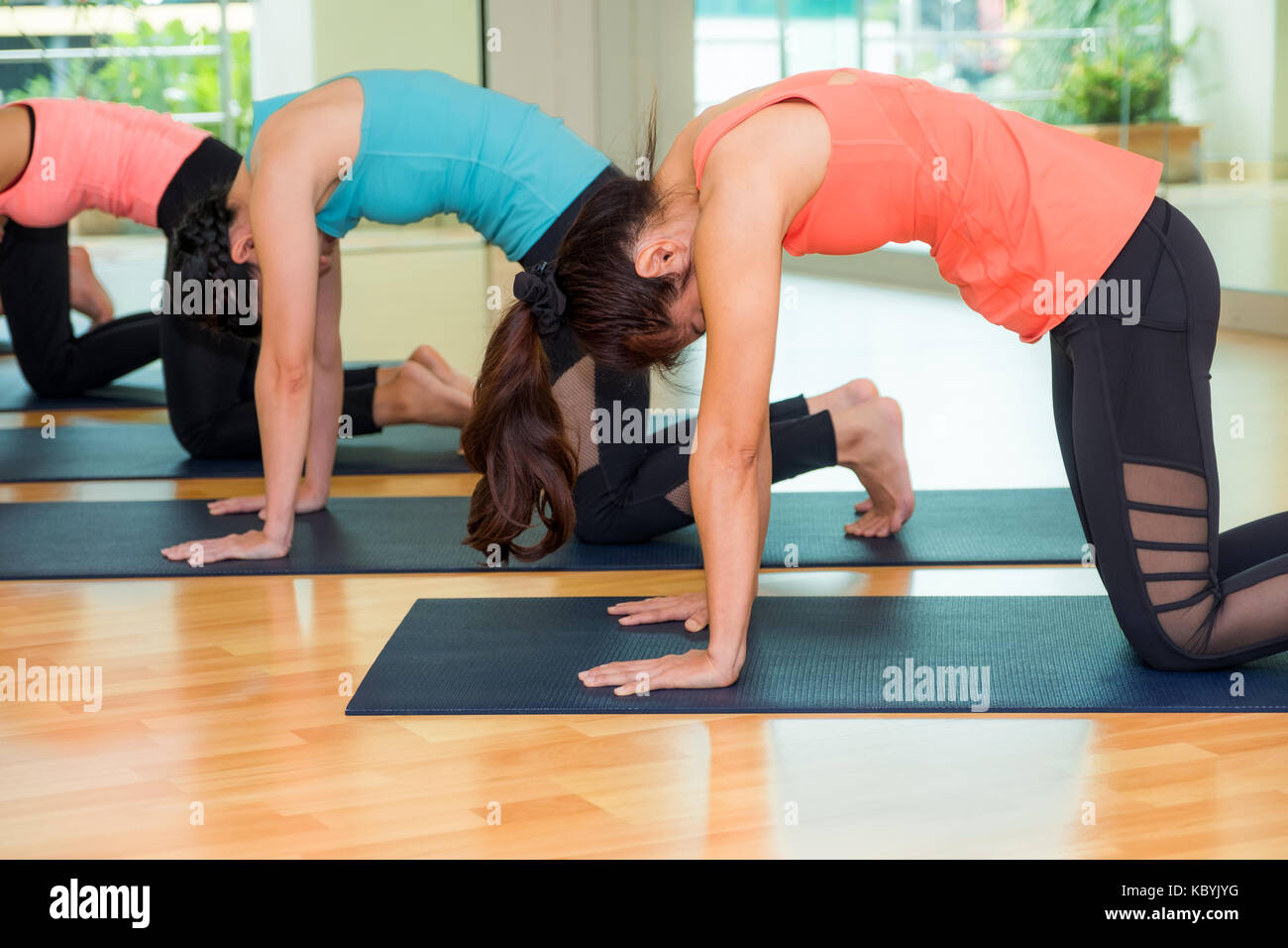 Group of people doing yoga cat poses in studio training room,Balasana poses,wellness and healthy lifestyle - Stock Image